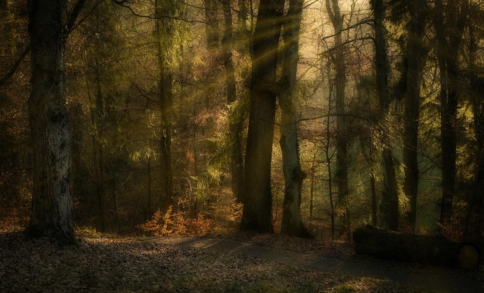 Lichtstrahlen-im-Wald-Forumsformat