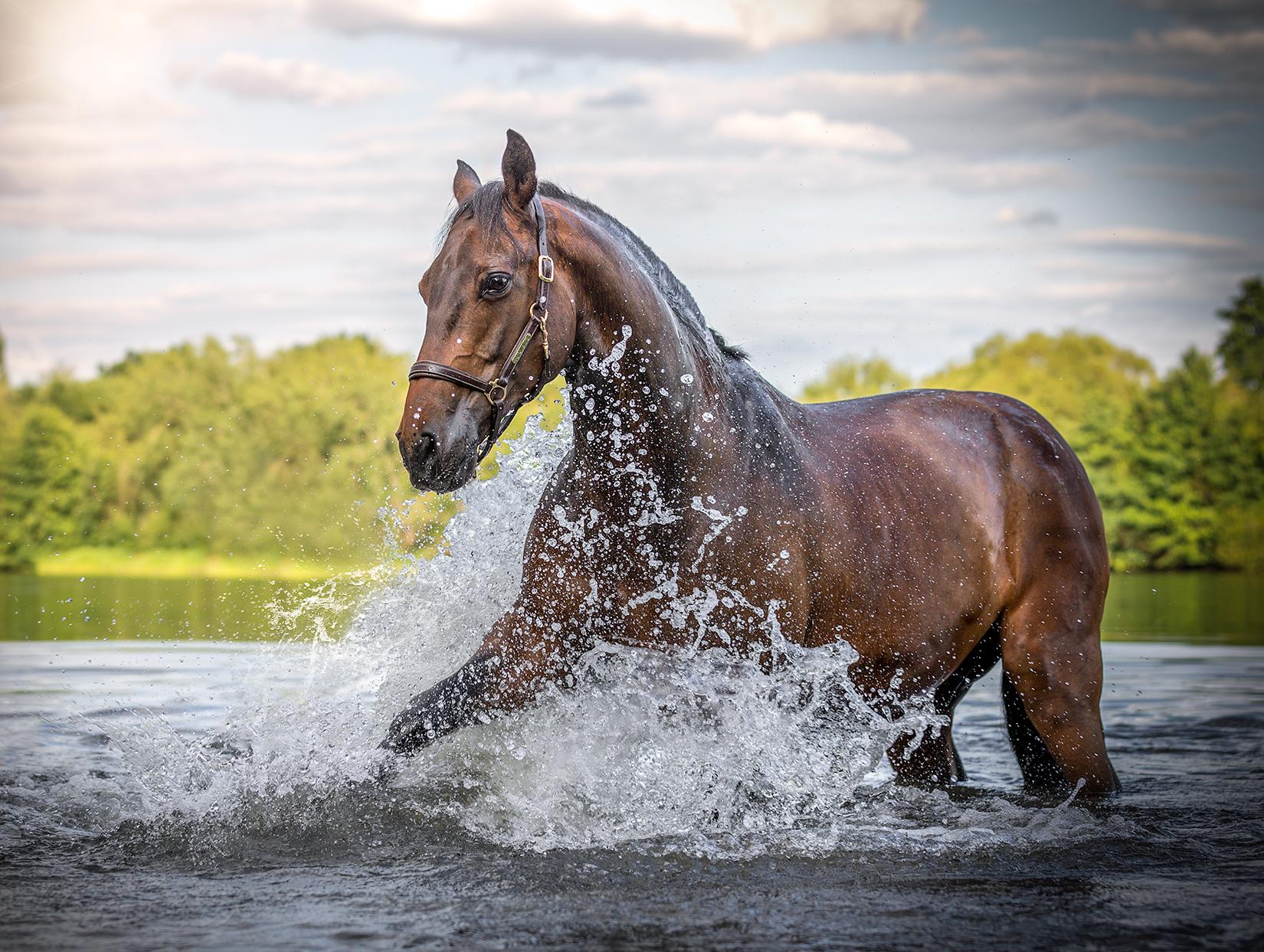 Pferd_Wasser