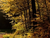 Oktober (Horst Seidel)